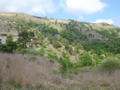 霧ヶ峰の植生_車山南斜面の樹叢